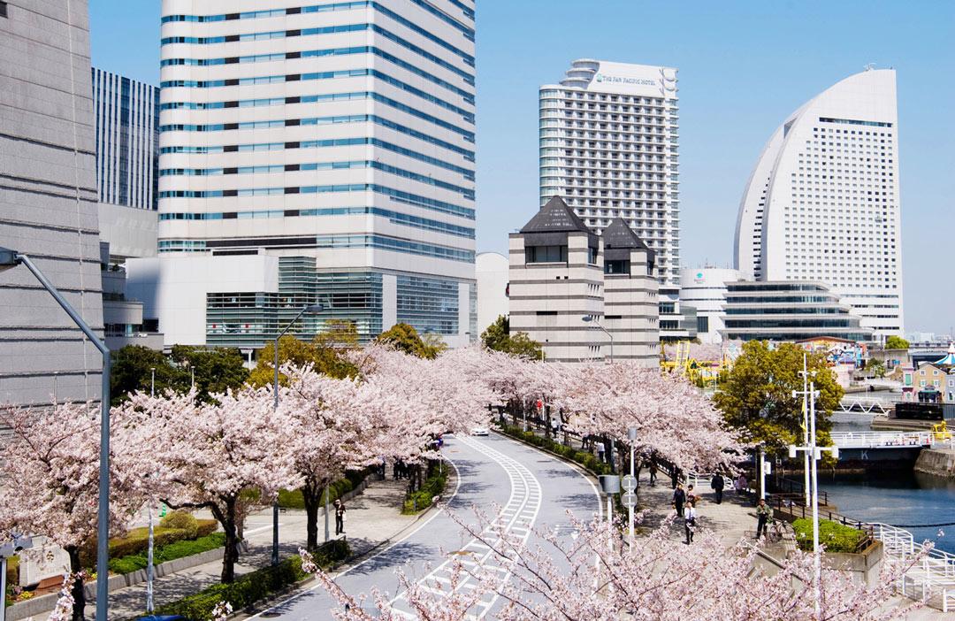Yokohama_Businessdestination_Cherryblossom
