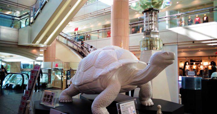 YokohamaTriennale-Schildkröte2017